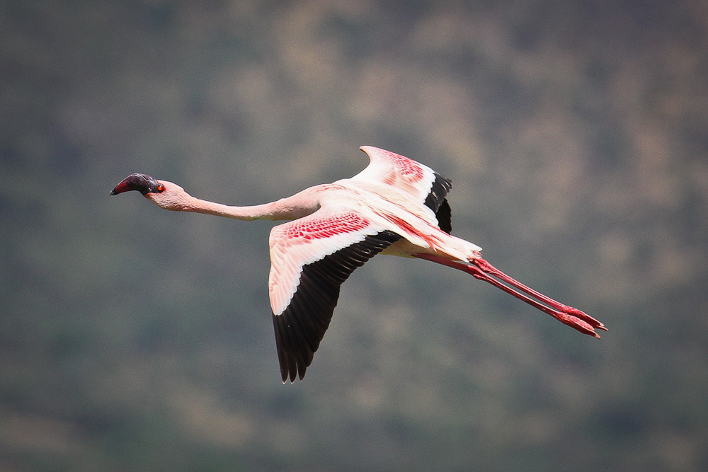 Lake Bogoria, Kenya