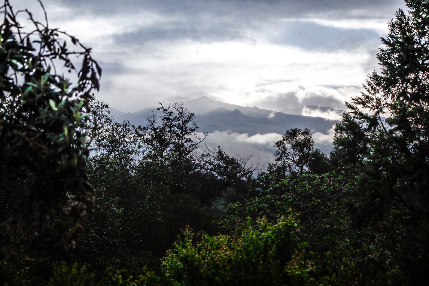 mt_kenya_morning-4571